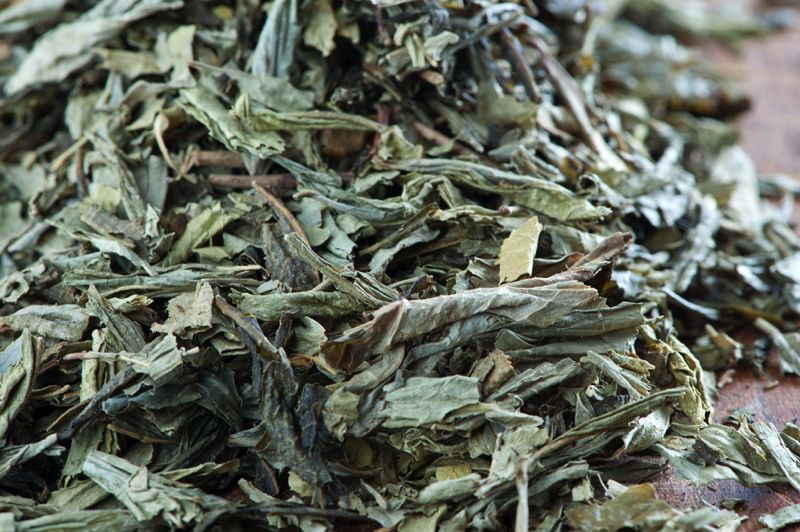 Sencha Greenfield light